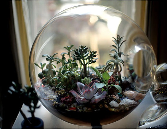 Paula Hayes, a green thumbed goddess who believes in the power of crystals  and that art exists only within that which is living. Her terrariums make  you ... - Hearty Magazine Terrarium Trend