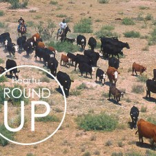 ROUND UP (SAMANTHA BRICK)